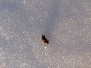 Dead bee on lake
